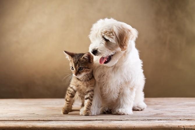 pet health maintenance