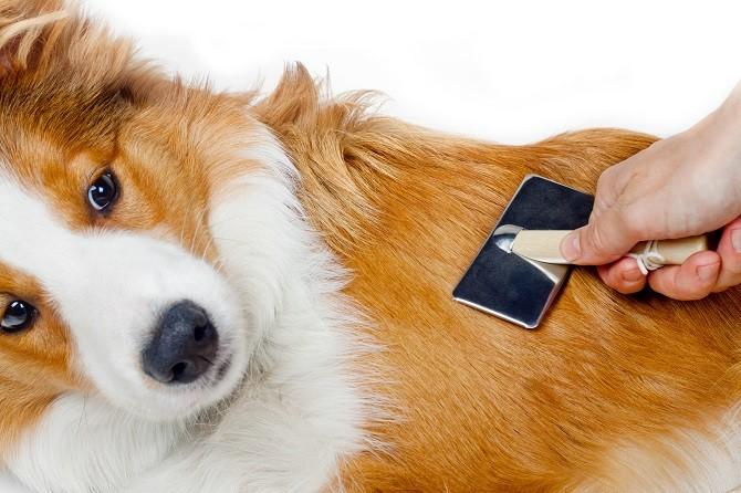 Fur Babies Pet Resort dog grooming